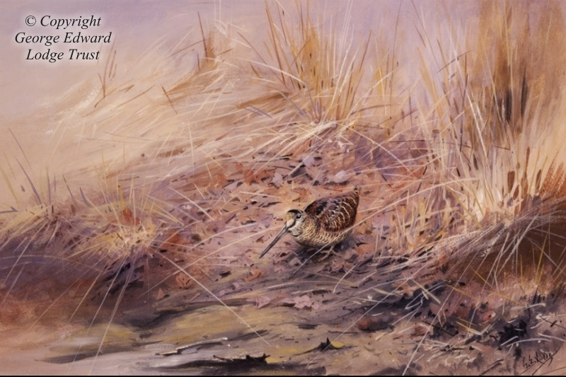 A woodcock among reeds (tempera)