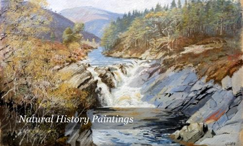 Natural History Paintings