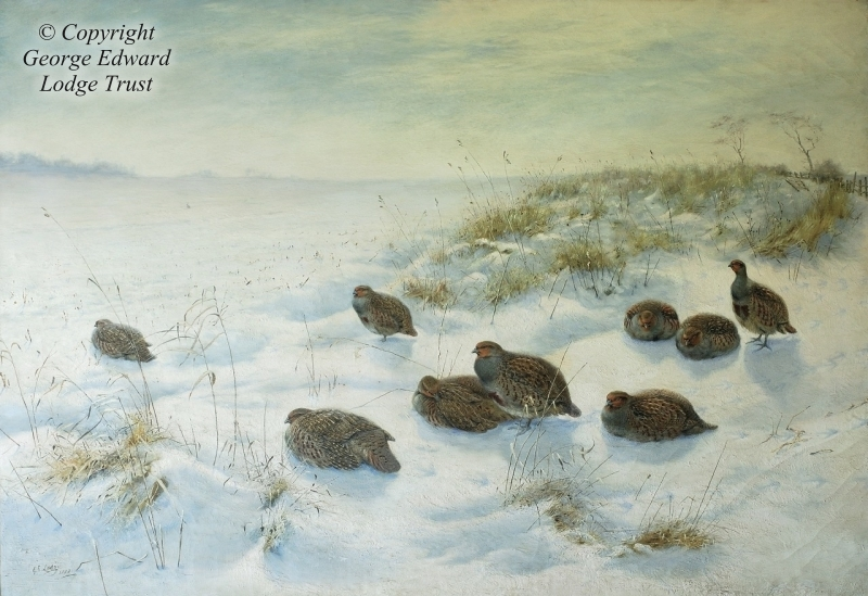 English partridges in winter landscape, 1888, (oil on canvas)