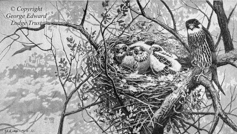 Wood Engraving - Hobby and nest